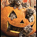 Chatons - halloween approche !