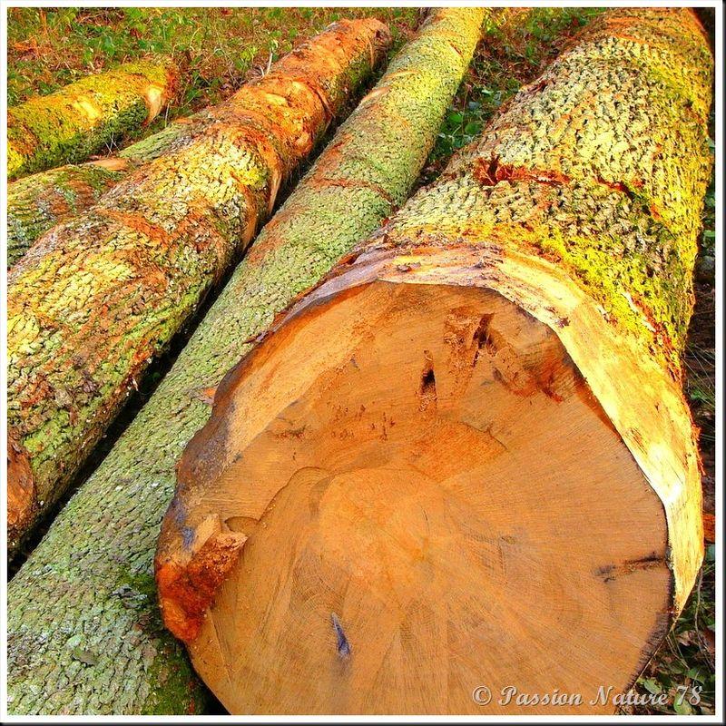 Le bois en forêt (5)