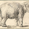 """""""hansken, rembrandt's elephant,"""" at the rembrandt house museum in amsterdam"""
