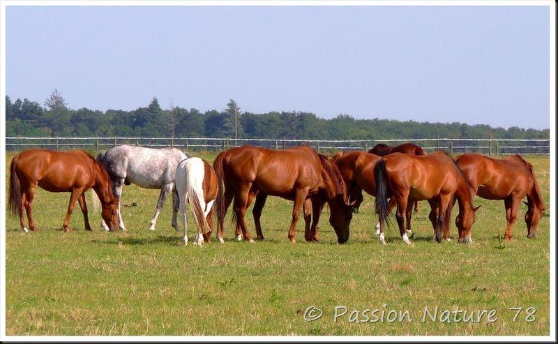 Les chevaux en pension (2)