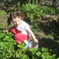jardinage 06
