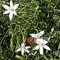 fleurs blanches (3)